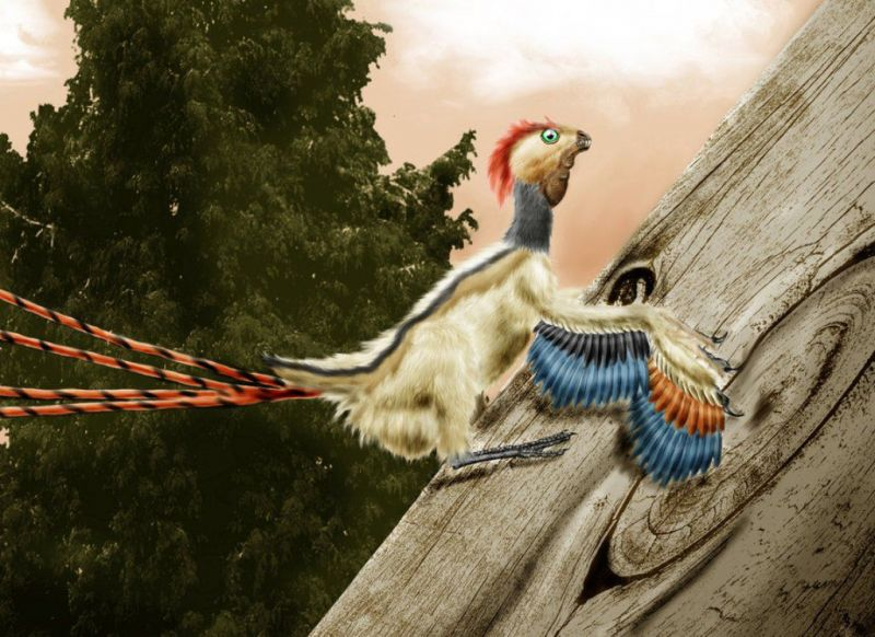 Картинки по запросу Епидексиптерикс фото