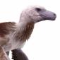 Dacotaraptor12
