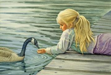 Feeding The Canada Goose