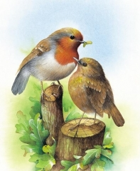 Robin and Chick