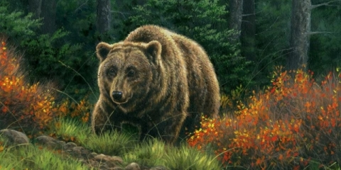 Montana Grizzly