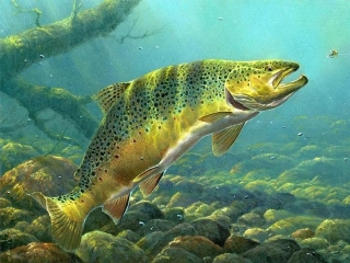 2013 Delaware Trout Stamp