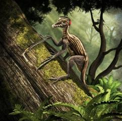 Epidedrosaurus ninchengensis