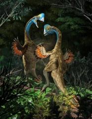 Anzu wileiyi, males fighting