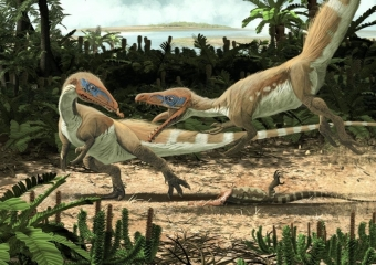 Sciurumimus albersdoerferi, small compsognathid from Late Jurassic of Germany