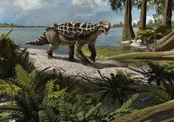Europelta carbonensis is the best preserved basal ankylosaur ever found in Europe