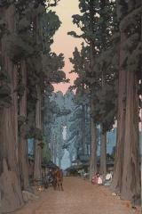 Avenue of Sugi trees