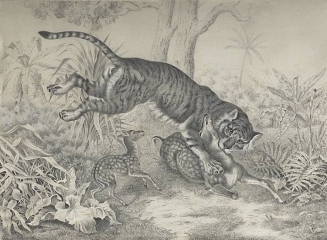 A Tiger Attacking a Sika Deer 1878
