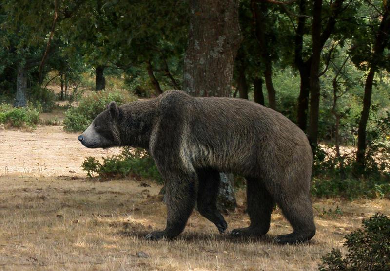 Фотоколлаж маша и медведь был разработан