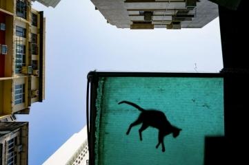Народный выбор, Города: 'Cat In The City Sky', автор: Jonas Chan