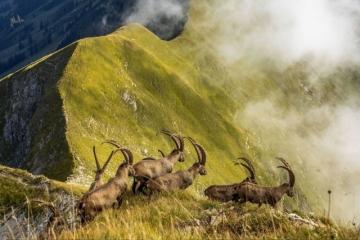 Похвальная грамота, Природа: 'King Of The Alps', автор: Jonas Schäfer