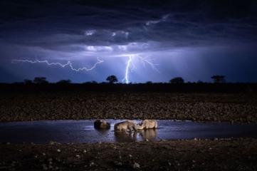 Народный выбор, Природа: 'Wildlife Under Lightning', автор: Kelvin Yuen
